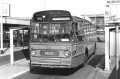 252-01-Leyland-Panther-a