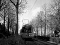 Groenezoom 1956-C -a