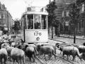 Rotterdam en z'n Tram nr 801a